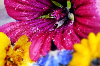 Kanderade blommor
